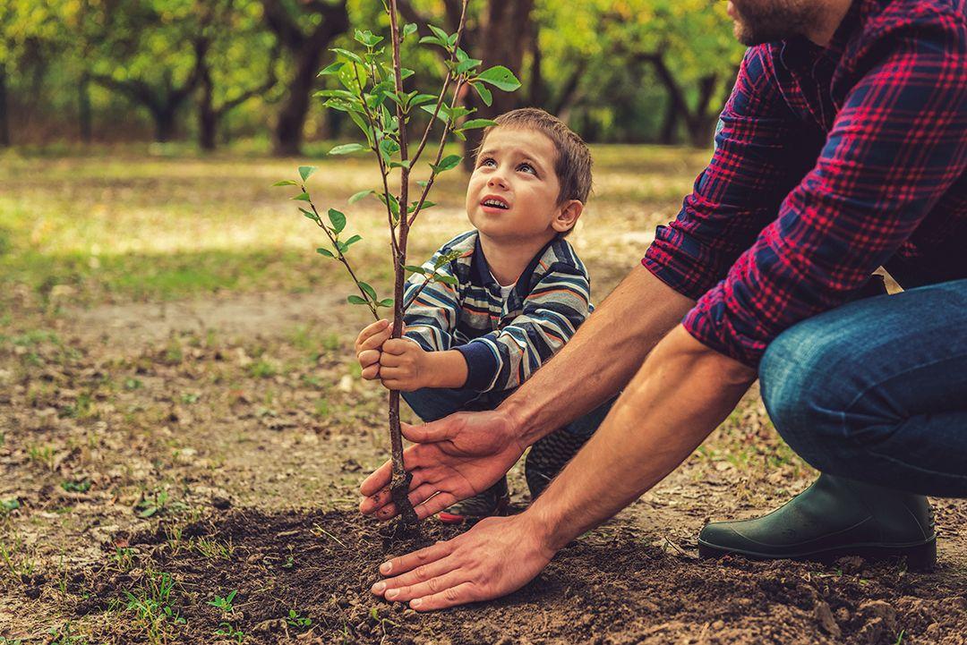 Niño plantando un arbol post eco