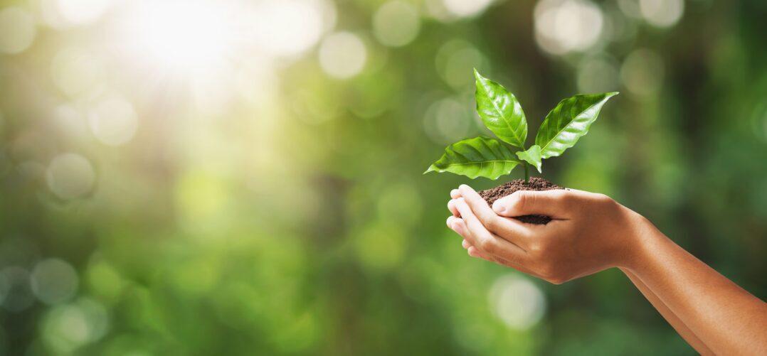 Empresas más sostenibles con el eco-packaging