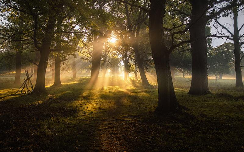 Paisaje de árboles con luz de sol
